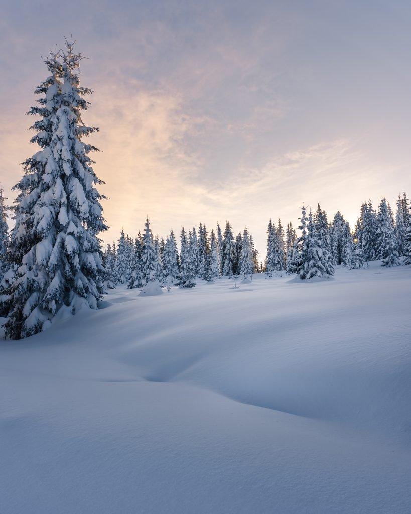 iarna brazi