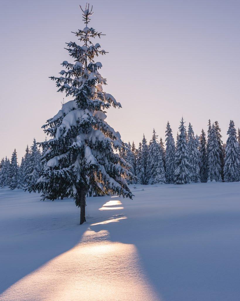 raza soara iarna